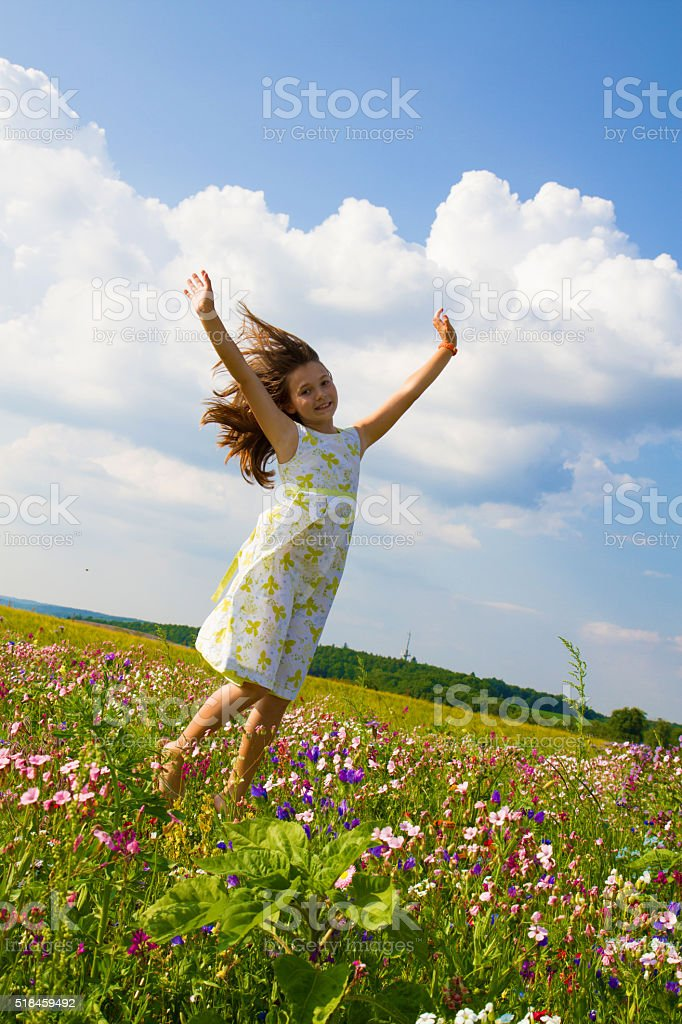 Fly in the field of flowers stock photo