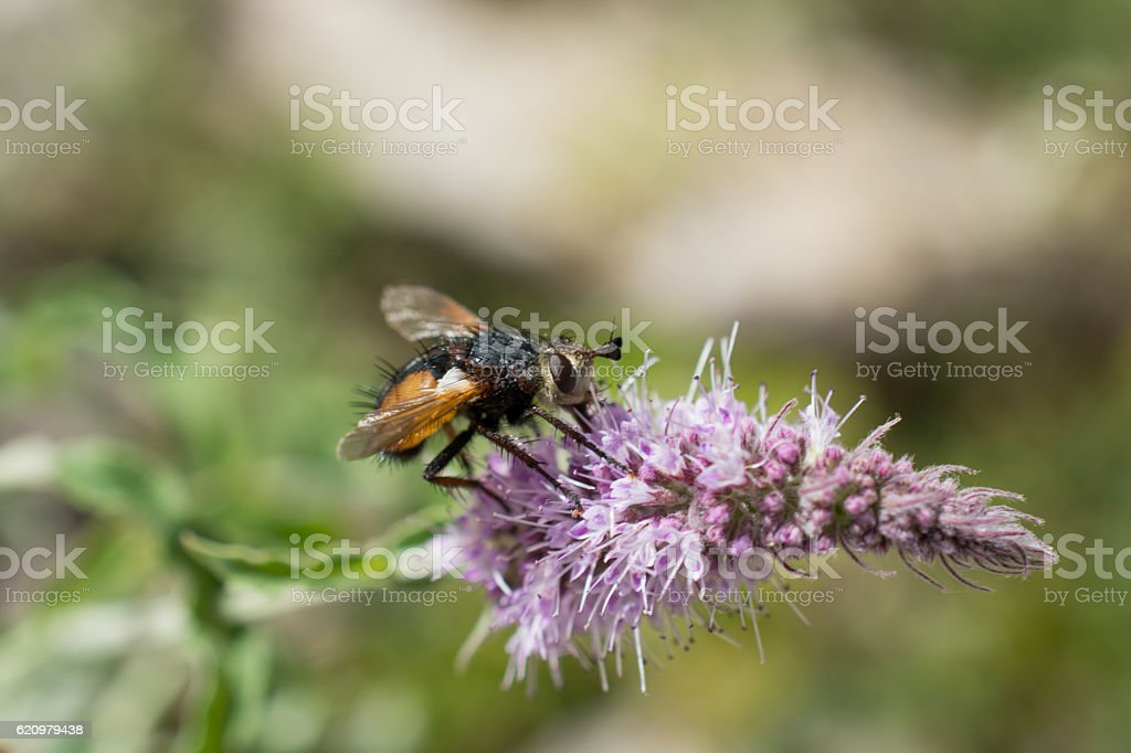 fly in the nature foto royalty-free
