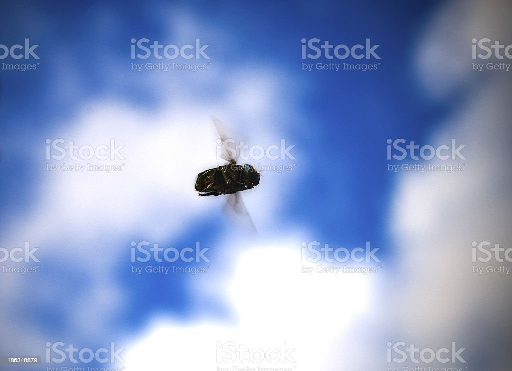 Fly in the sky stock photo