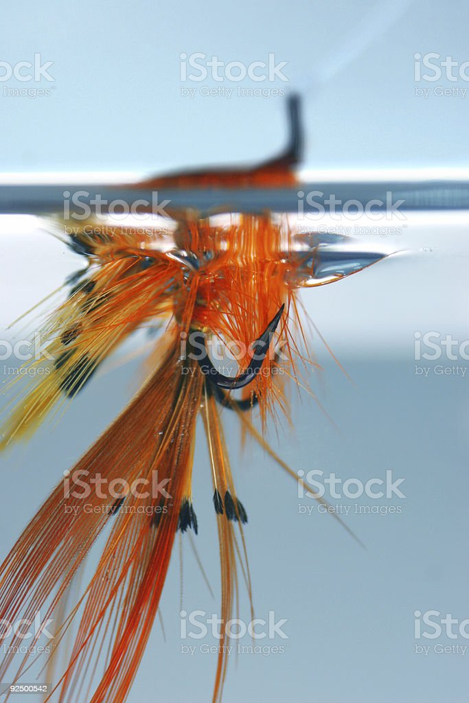 Fly in water royalty-free stock photo