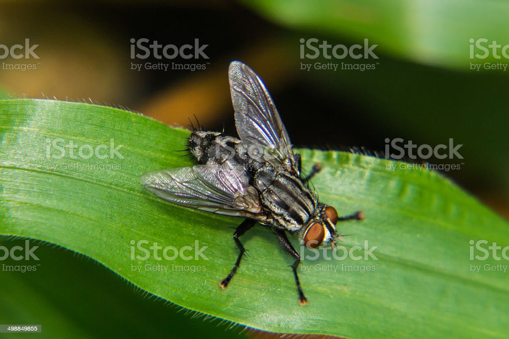 Fly macro royalty-free stock photo