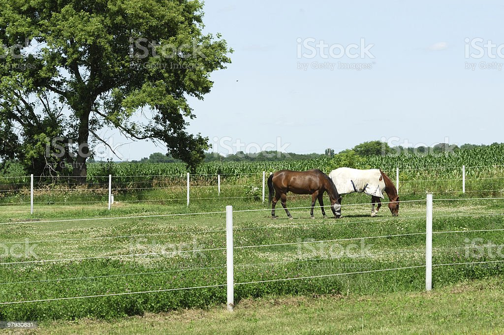 Fly Mask and Blanket royalty-free stock photo