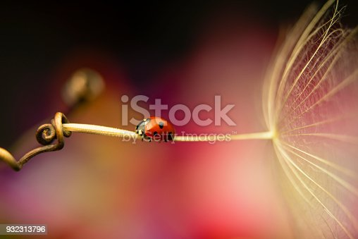 Macro capture of a ladybug sitting on a dandelion seed with a colourful background.
