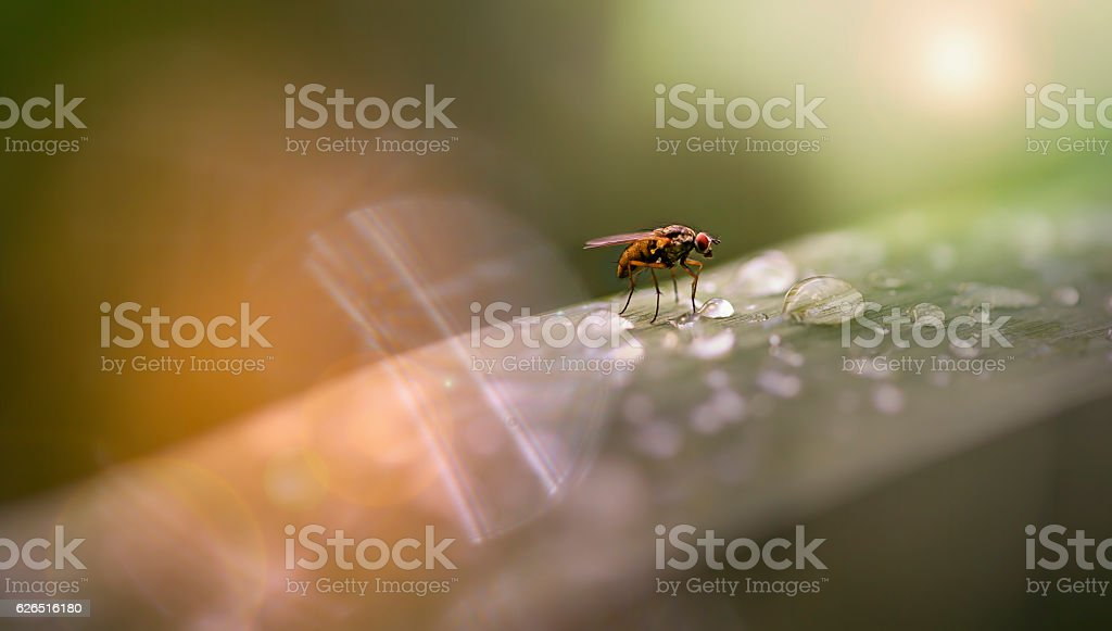 Fly on a dewy straw stock photo