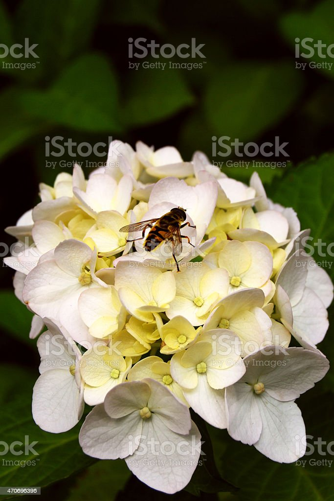 Fly on a flower. stock photo