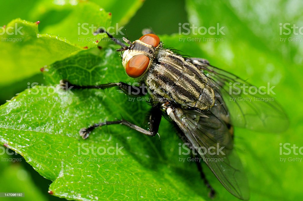 Fly on a Green Leaf royalty-free stock photo