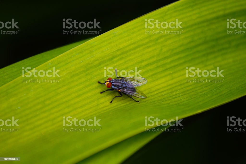 Fly on a leaf royalty-free stock photo