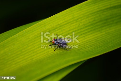 Fly On A Leaf Stock Photo & More Pictures of 2015