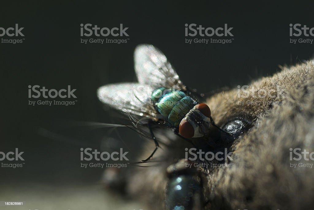 Vol sur une souris - Photo