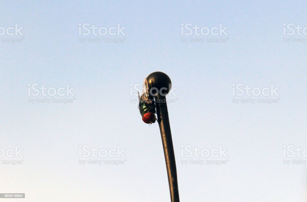 Fly on a pole - Royalty-free Animal Antenna Stock Photo