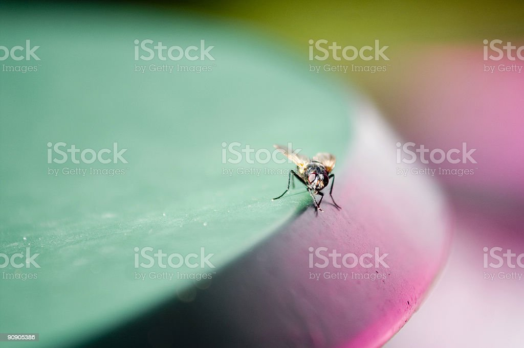 Fly on a table stock photo