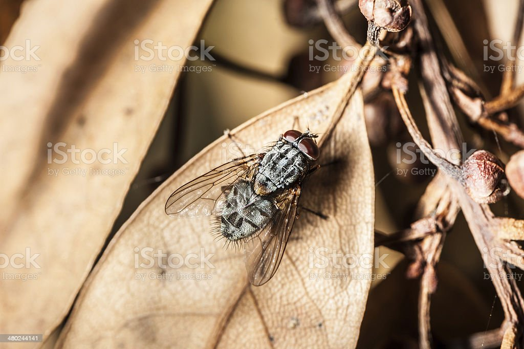 Fly on dead leaf royalty-free stock photo