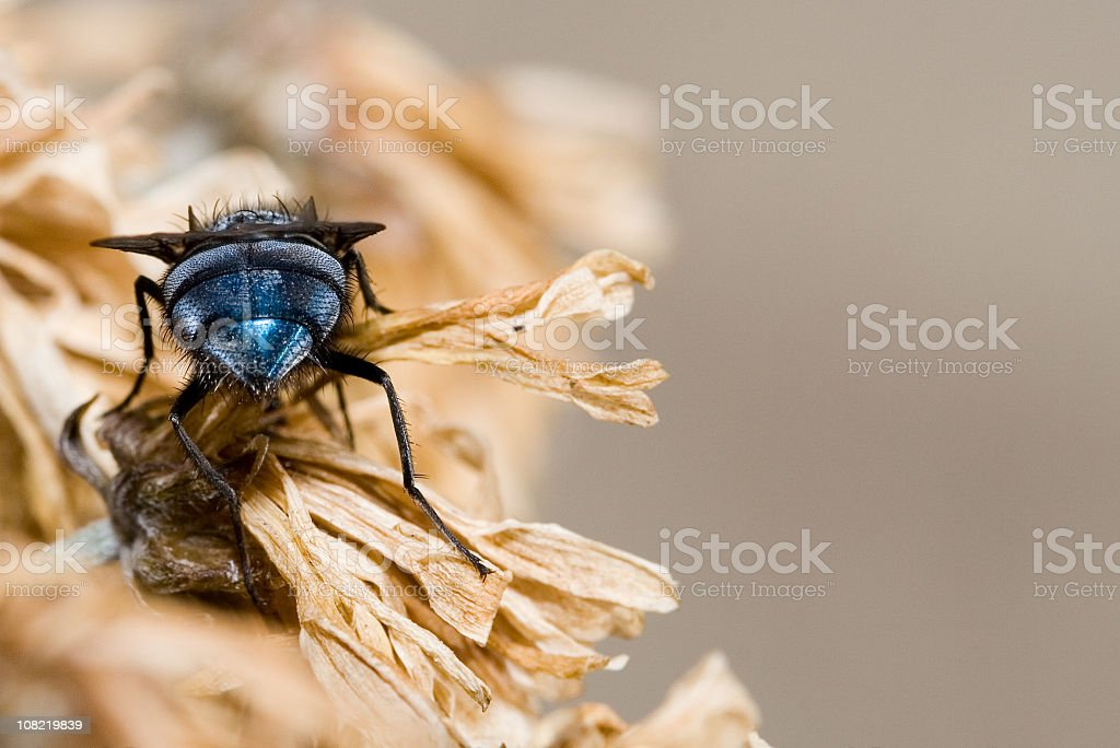 Fly on dried flower stock photo