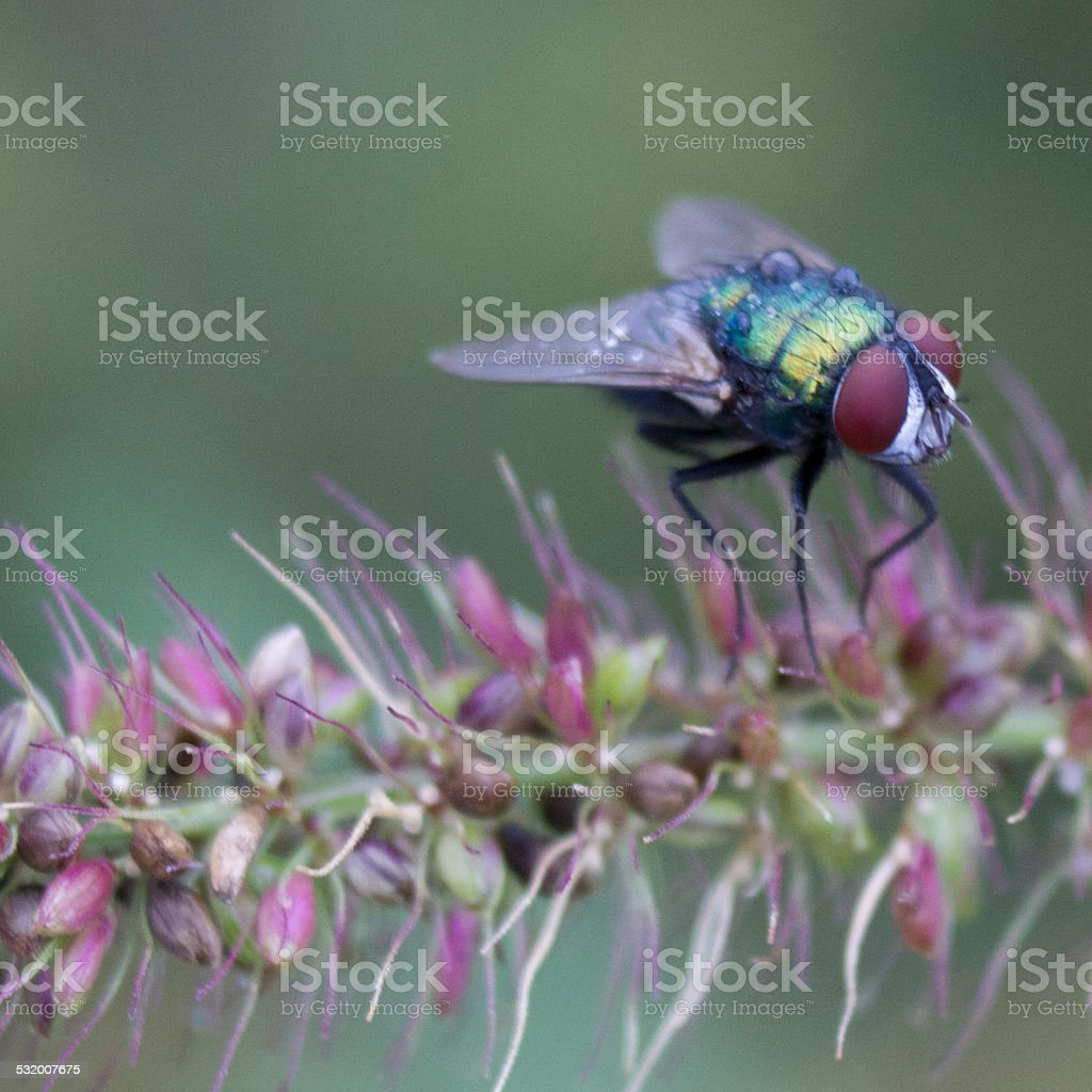 fly on flowers stock photo