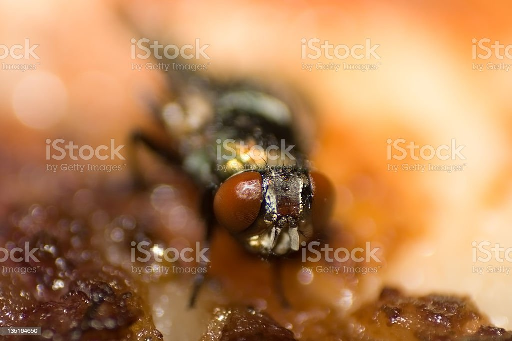 Fly on Food royalty-free stock photo