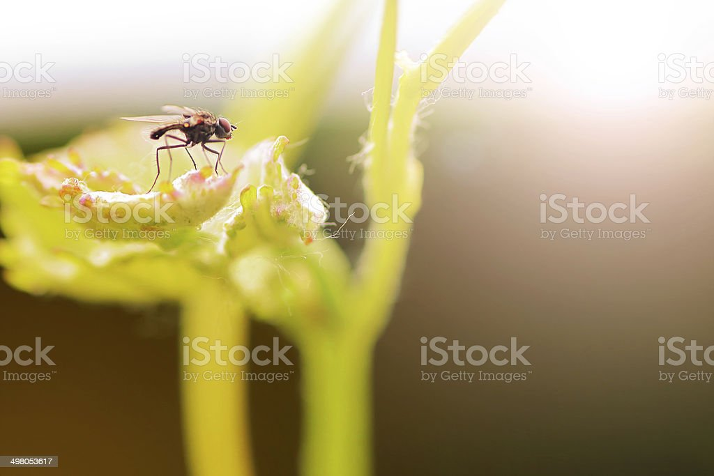 Fly on leaf royalty-free stock photo