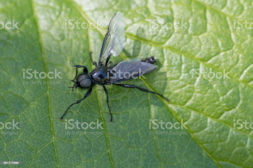 Fly on leaf stock photo