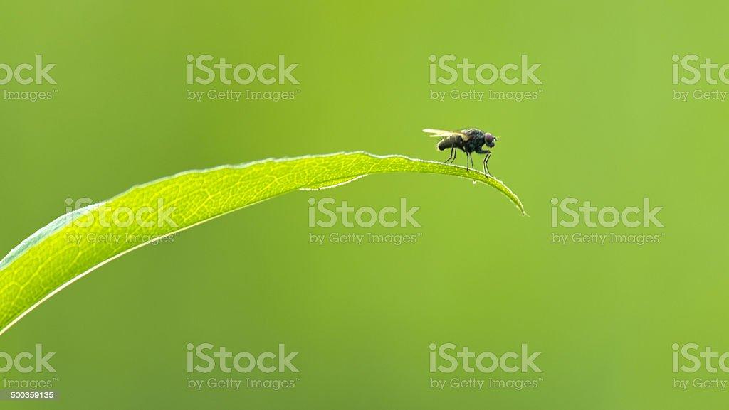 Voe sobre fundo verde folha com - foto de acervo