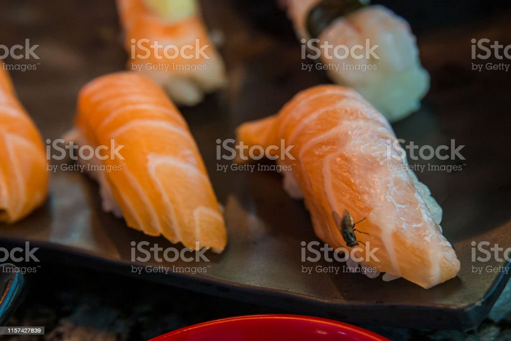 Fly on sushi salmon . fly eat salmon fish , carrier of communicable...