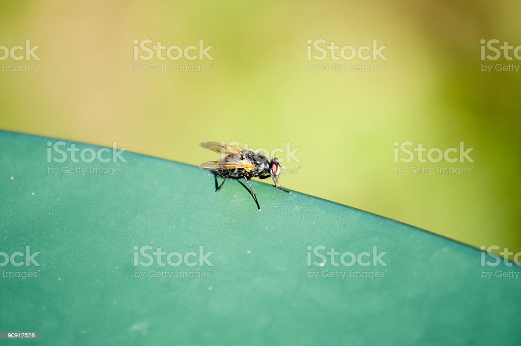 Fly on the edge of a table stock photo