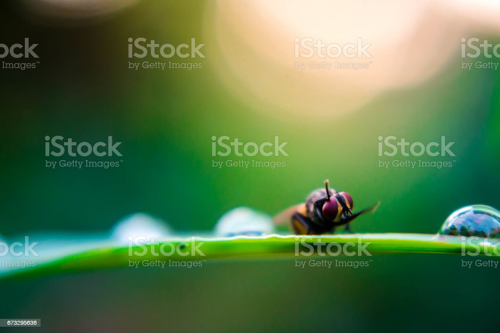 Fly on the leaf in nature close up. royalty-free stock photo