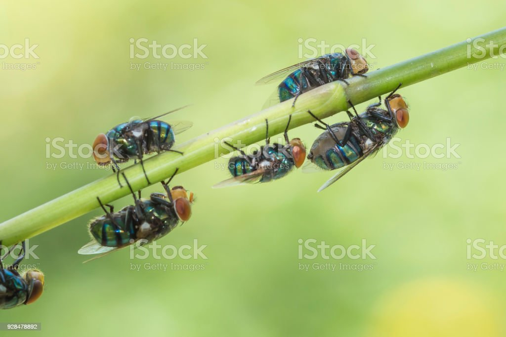 Fly on the plant in nature, green as the background. stock photo