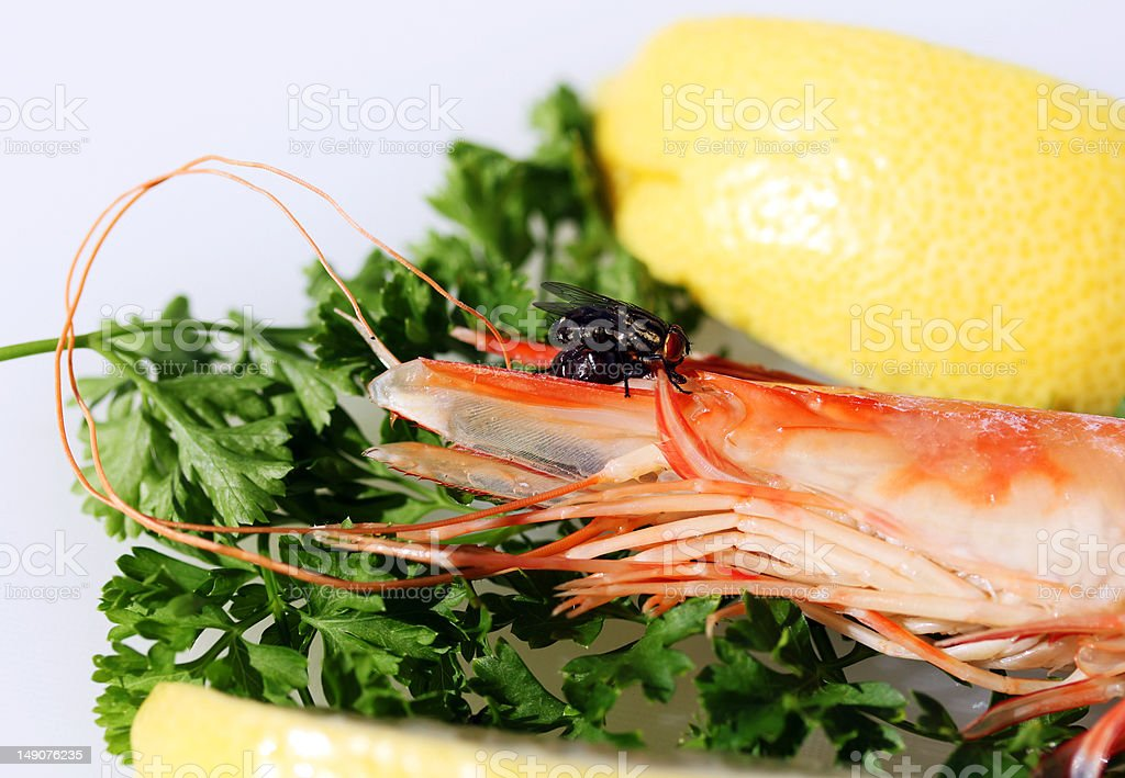 Fly on the prawn royalty-free stock photo