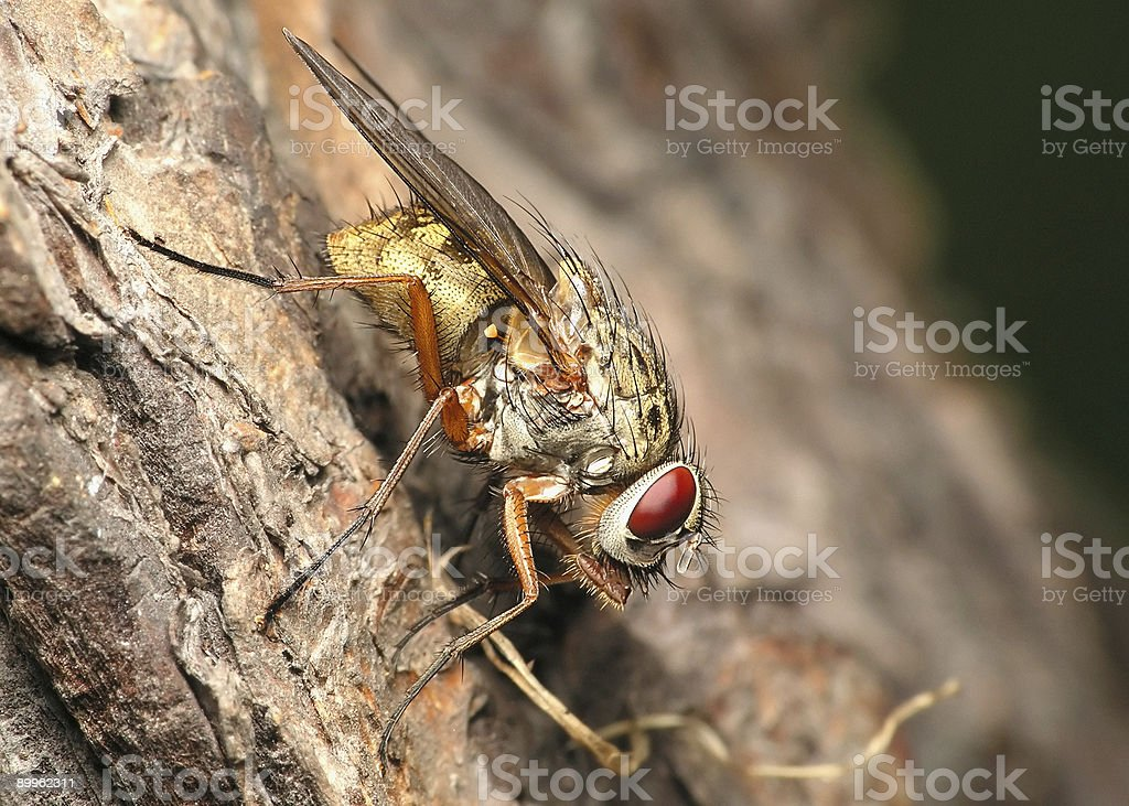 Fly on the tree royalty-free stock photo