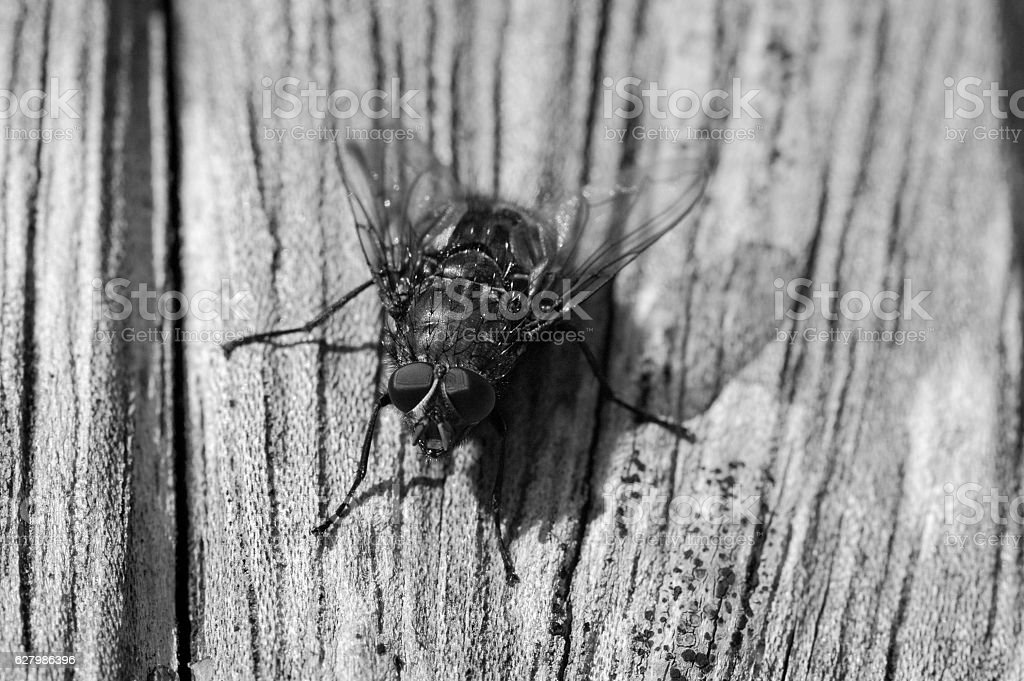 Fly on Wood stock photo