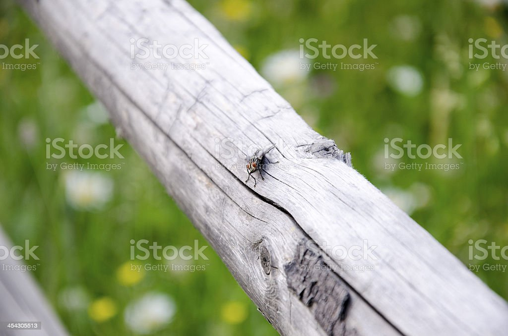 Fly on wooden fence royalty-free stock photo