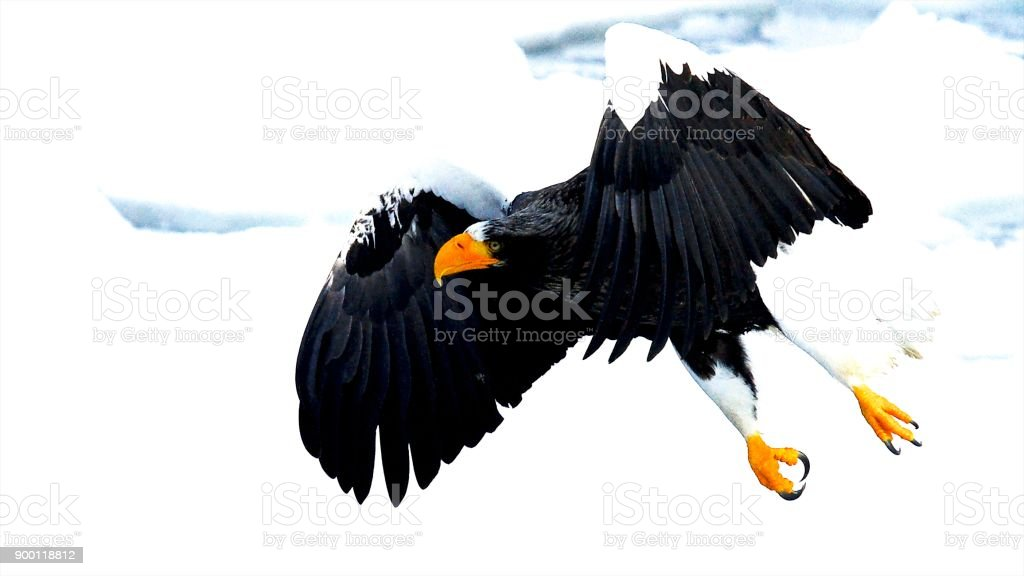 Fly over the drift ice stock photo