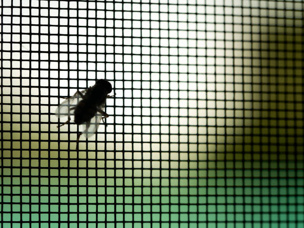 Fly Perched on The Mosquito Screen The Fly Perched on The Mosquito Screen in The Window Frame fly insect stock pictures, royalty-free photos & images