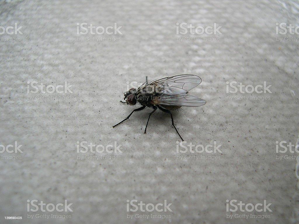 fly - Photo