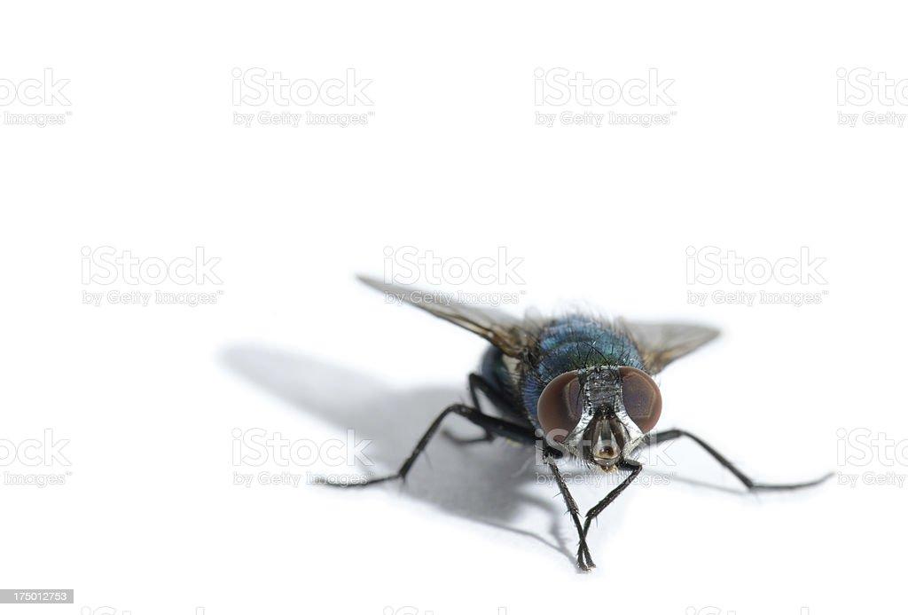 fly stock photo