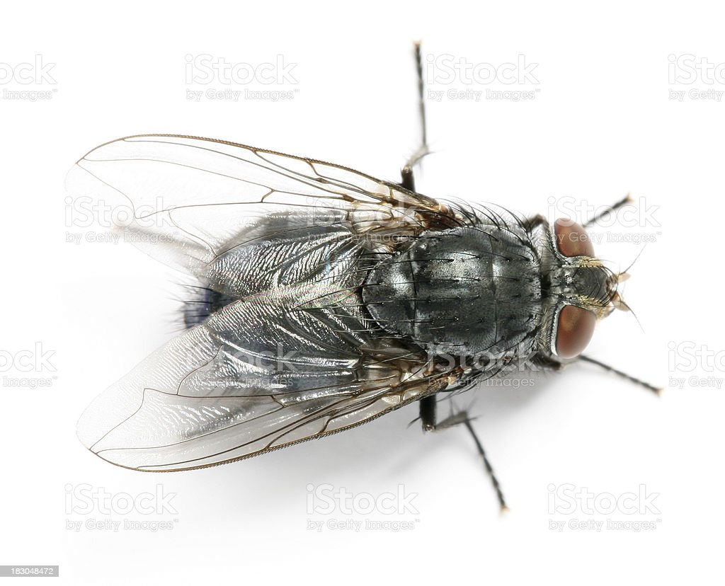 fly royalty-free stock photo