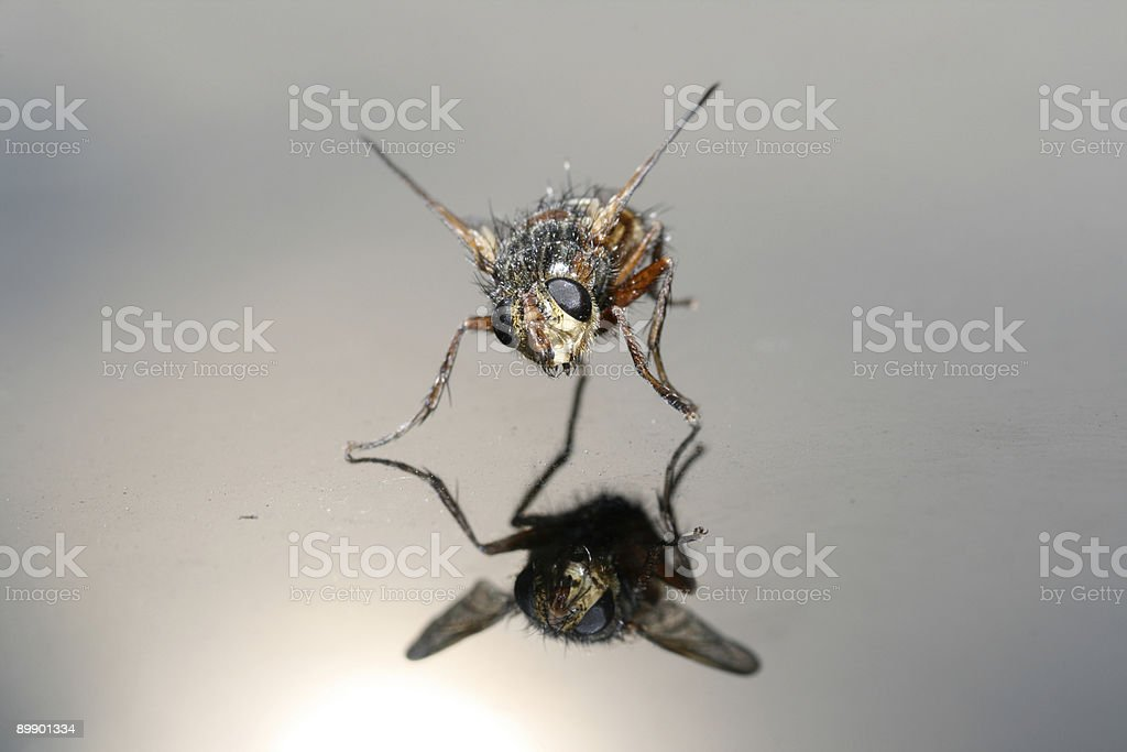 Fliege royalty-free stock photo