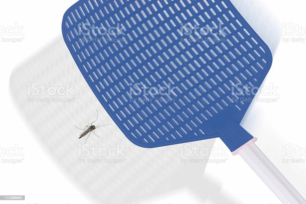 Fly Swatter & Mosquito stock photo