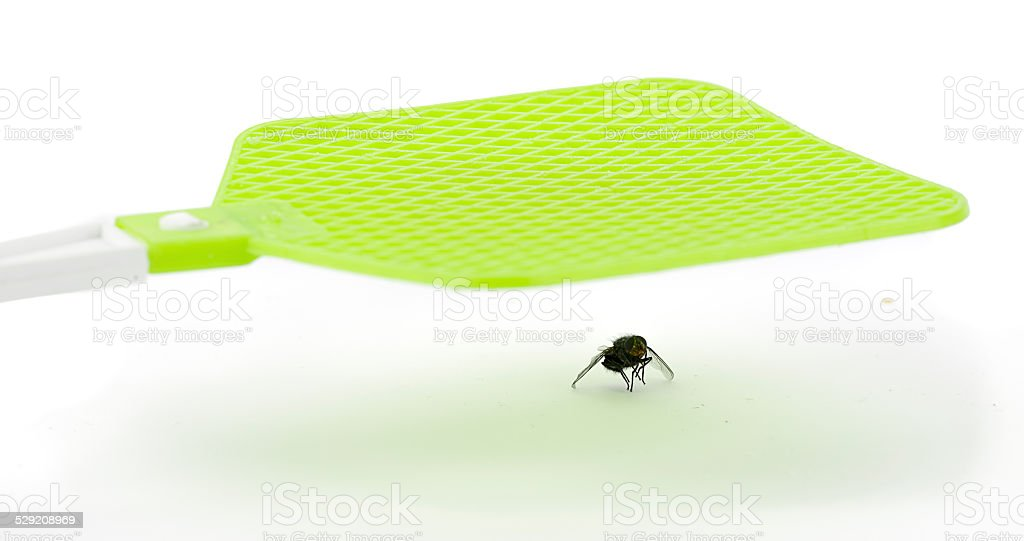 Fly Swatter stock photo