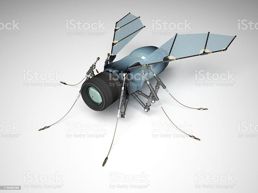 Fly webcams royalty-free stock photo