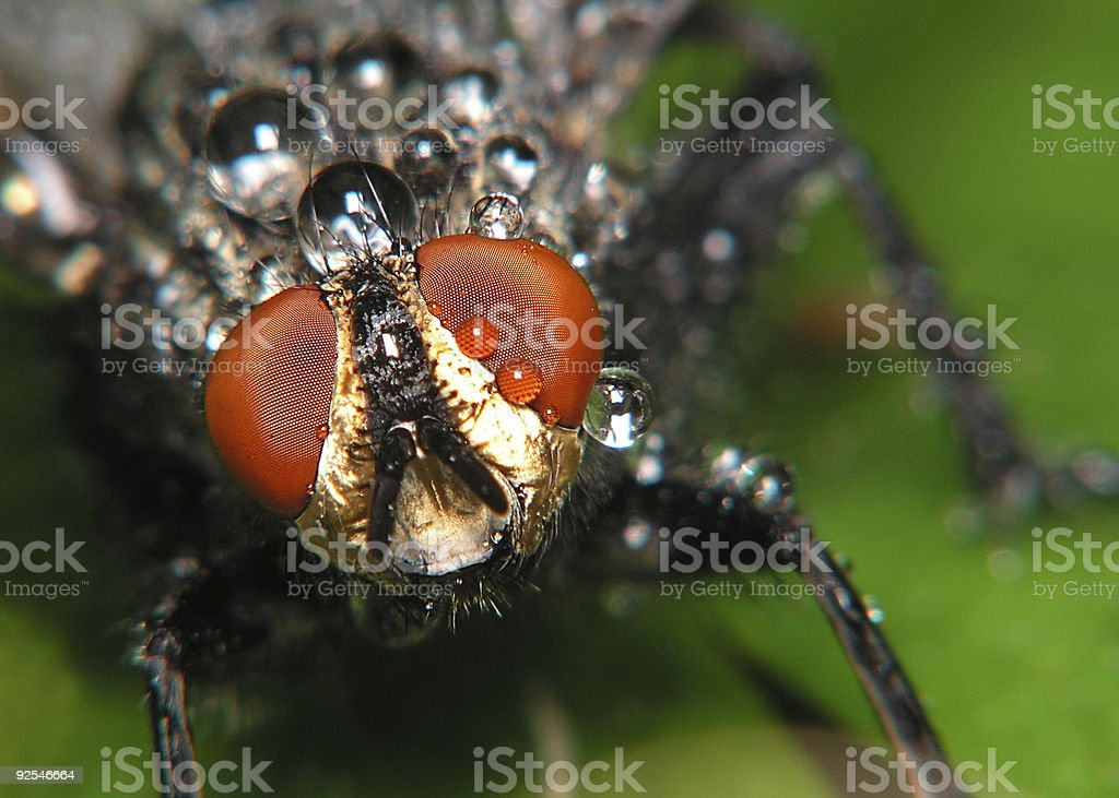 Fly with droplets royalty-free stock photo