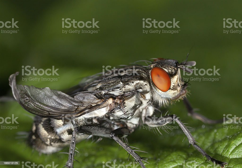 Fly with great details royalty-free stock photo