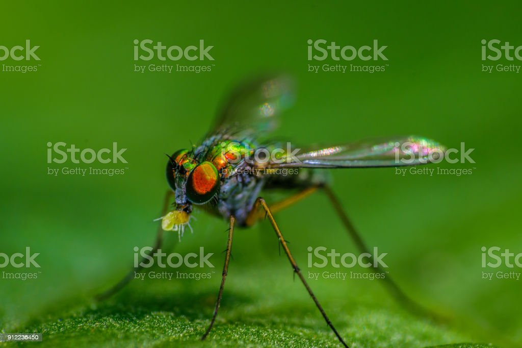 Fly with prey! stock photo
