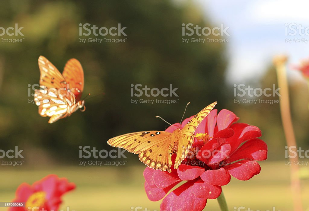 Fly-by royalty-free stock photo
