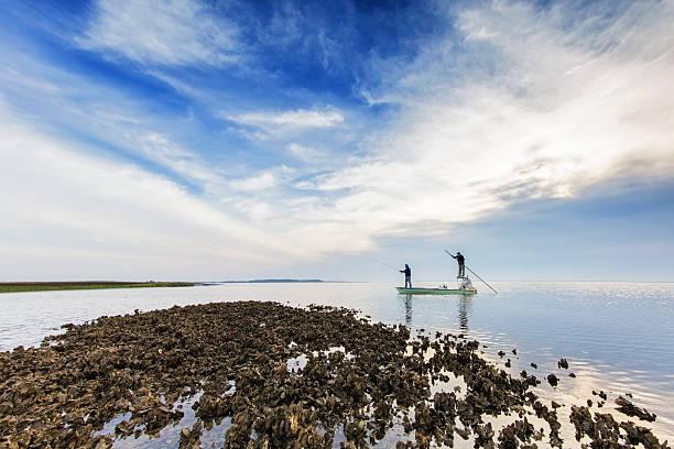 flyfishing na wybrzeżu w południowej karolinie, usa - mokradło zdjęcia i obrazy z banku zdjęć