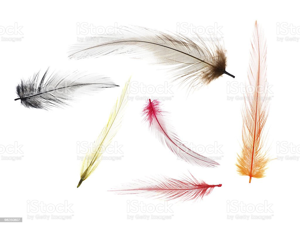 Fly-fishing Feathers royalty-free stock photo