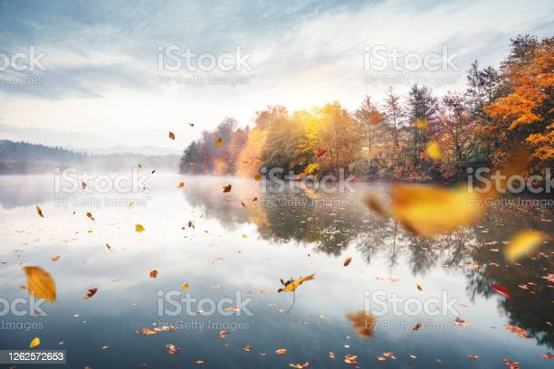 Photo of Flying Autumn Leaves