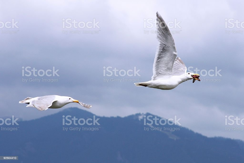Flying Away With The Food royalty-free stock photo
