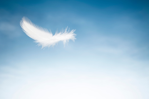 White feathers floating in the sky with sunlight pastel