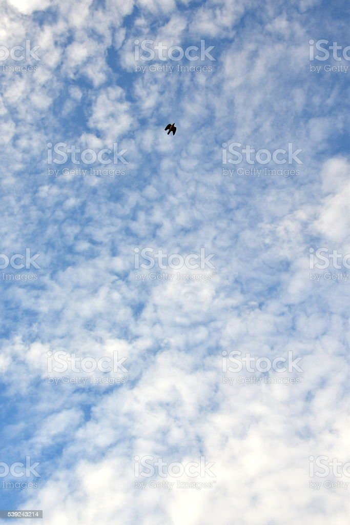 flying bird in sky royalty-free stock photo