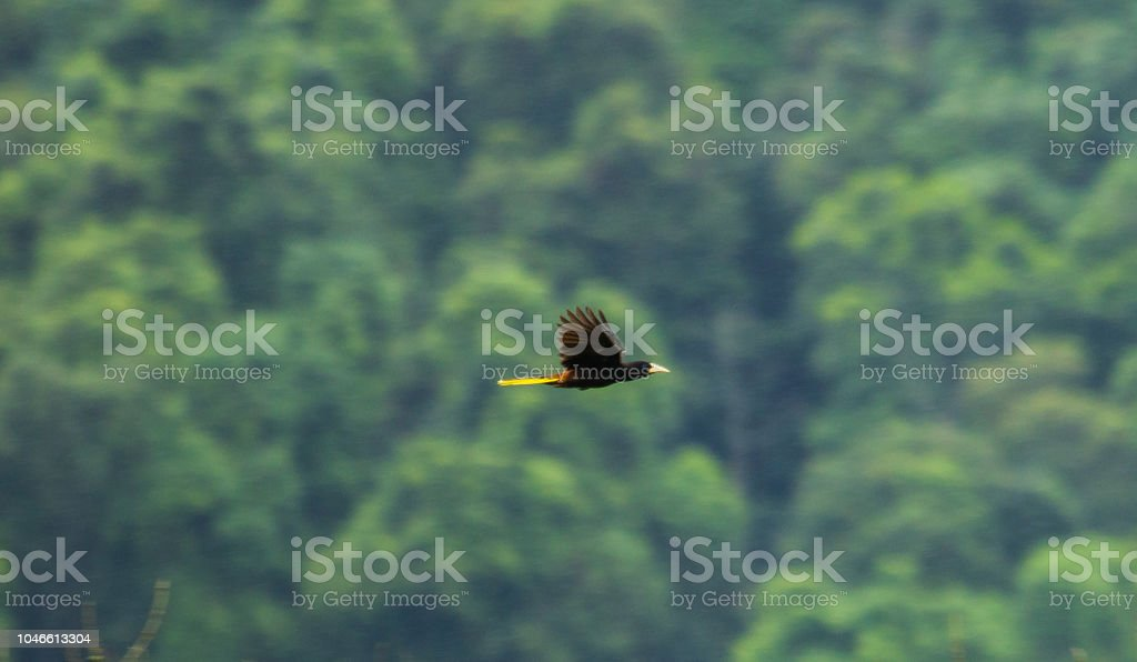 Flying bird stock photo